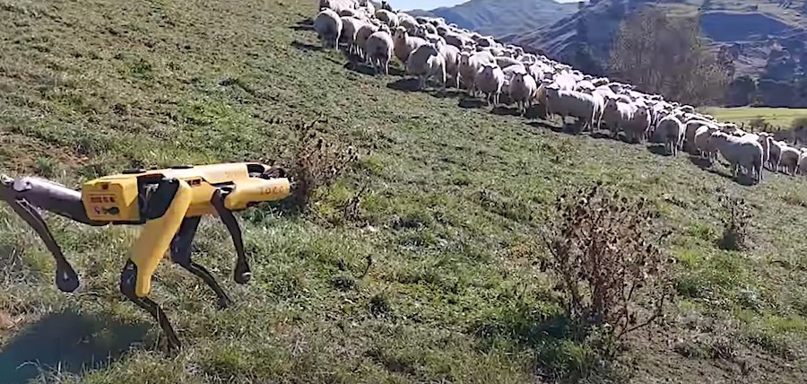 Here Is a Robot Going All Shepherd on a Bunch of Sheep