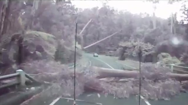 Trees Falling Like Dominos Caught on Aussie Motorist's Dashcam