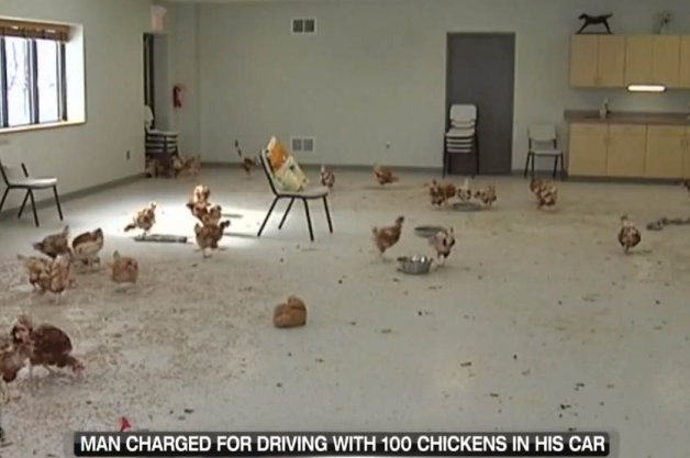 Man Jailed 180 Days for Drunk Driving with 100 Chickens