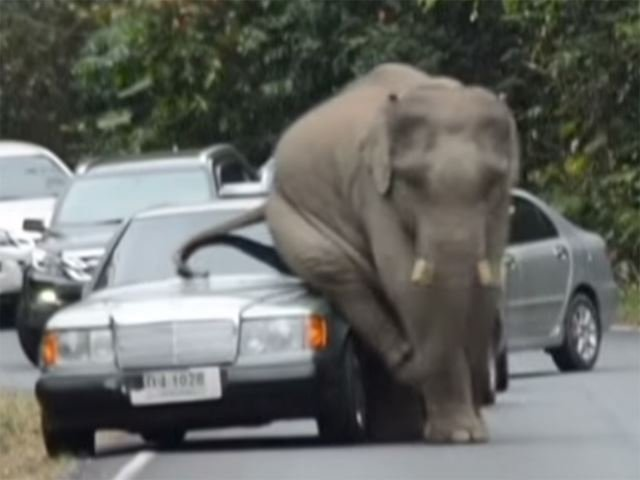 Um, Yeah, So Here's a Wild Elephant Wiping Its Ass on a Mercedes