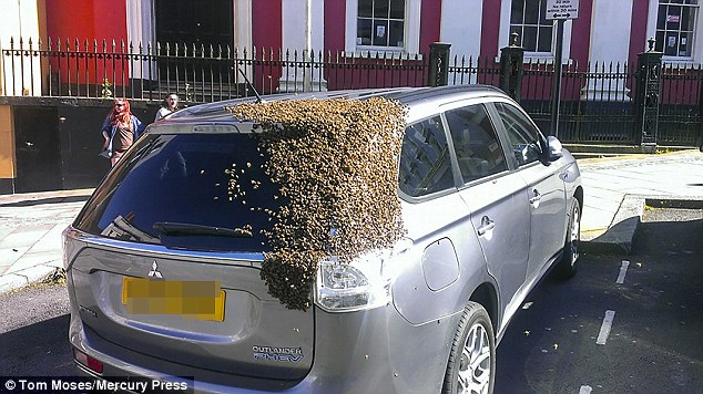 Swarm Of 20,000 Bees Follows Car Around For Two Days After Their Queen Gets Stuck In The Boot