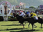 Horse Racing: Day 3rd - Solar Symbol Courage; Day 4 - Solo Traveller Wins Tactically