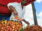 Harvest 2012: First Season Lychee for Rs 800 per Kilo