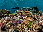 Warm Seas Threaten Great Barrier Reef Treasure