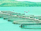 Aquaculture to Boost Growth