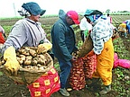Employment: Young People Reject Agricultural Sector