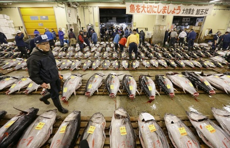 Fish auction market, Japan