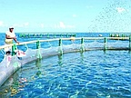 Aquaculture: 20 Floating Cages in Our Lagoons Soon