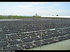 Crab Farming Soon a Reality