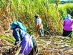 Sugar Industry: 40% Wage Increase Claimed