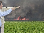 Fires Cane Fields: Criminal Or Accidents?