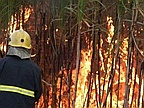 Two Fields of Cane Fires at Flacq