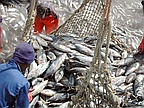 Ministry of Fisheries Defends Agreements with EU