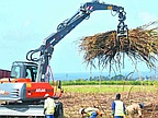 Harvest 2012: Rs 87.5 Million From The Sugar