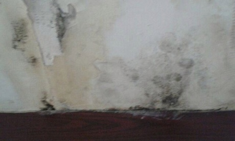 Mould covered the walls in the hotel bedroom