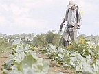 Agriculture: Foreign Workers Wanted