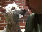 Video of the Day: Rescue of a Homeless Dog Living in a Trash Pile
